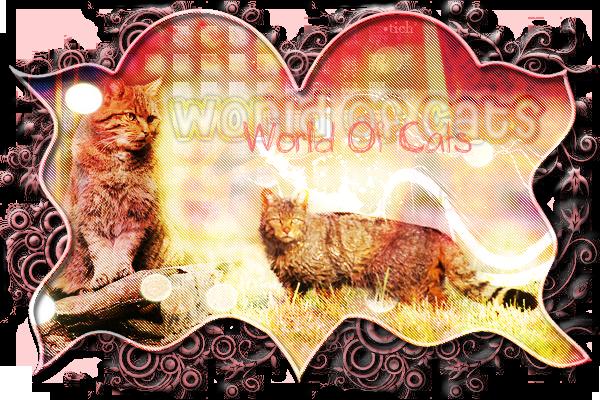Bannière chats 953663world_of_cats_bann