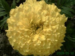 le début , des changement dans un jardin, (suivi 2009 de christelle) Mini_568792PICT0793