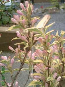 le début , des changement dans un jardin, (suivi 2009 de christelle) Mini_694547PICT0821
