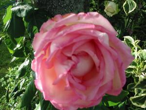 le jardin de jojo Mini_710348113_1316_IMG