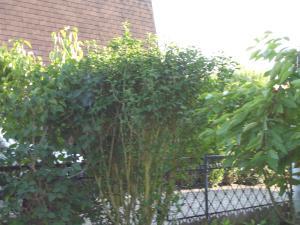 petit tour de la maison a l'extérieur Mini_824887DSC03614