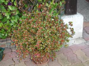 petit tour de la maison a l'extérieur Mini_968795DSC03607