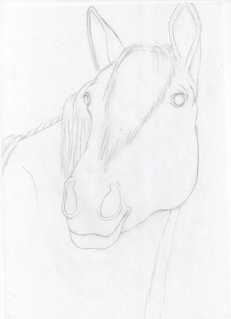 Galerie de Janis 129020portrait_cheval_croquis