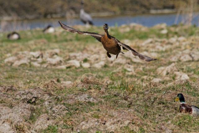 Parc ornithologique du Marquenterre 145649Marquenterre_Avril_2010_RAW_380_DxO_raw__800x600_