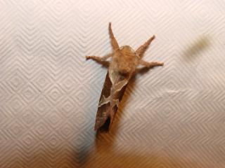 le déffilé des chenilles et des papillons 159313photos_385