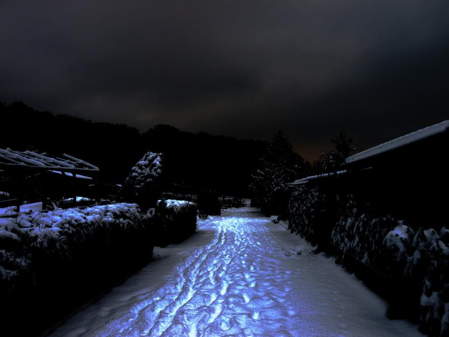 Jardin le soir 231195essai1