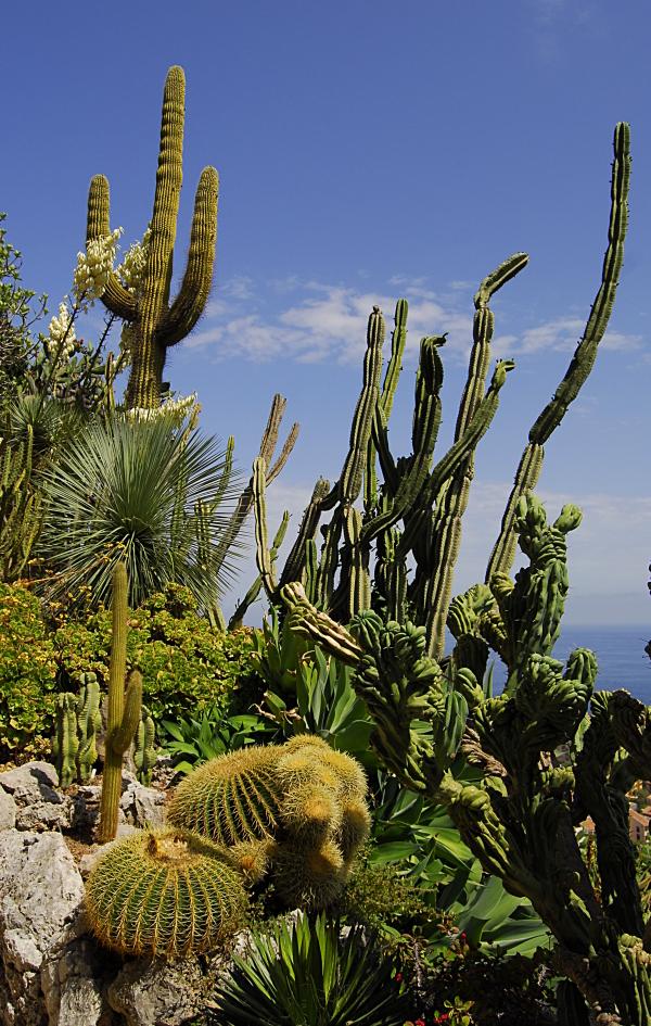 Jardin exotique de Monaco 243677_DSC0198