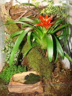 Présentation de vos terrariums 251942photos_152