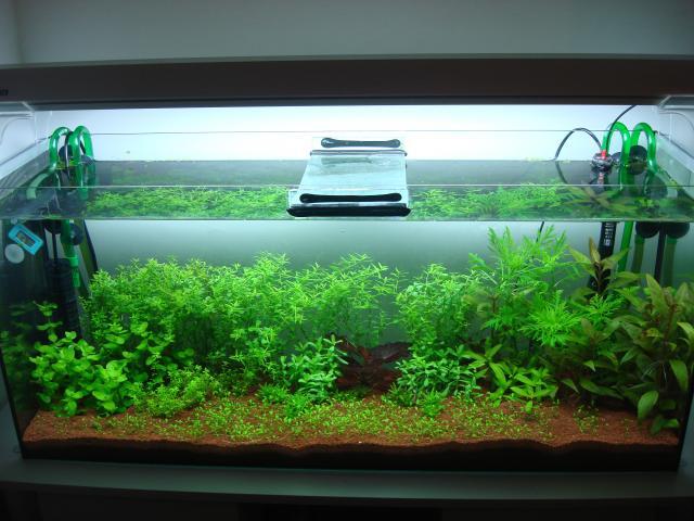 120 litres Planté 267687DSC08305