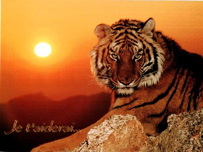 The Dawn of Change, mon premier forum en tant que fondatrice ^^ 277008Copie_de_chine_tigre_de_chine_meridionale_1229900255