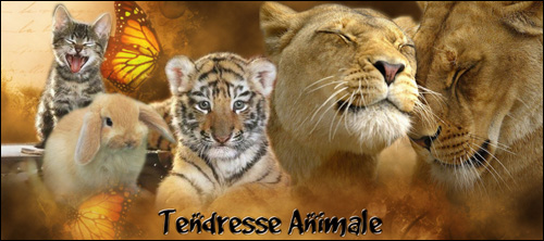 Tendresse Animale ... 28455header_pub