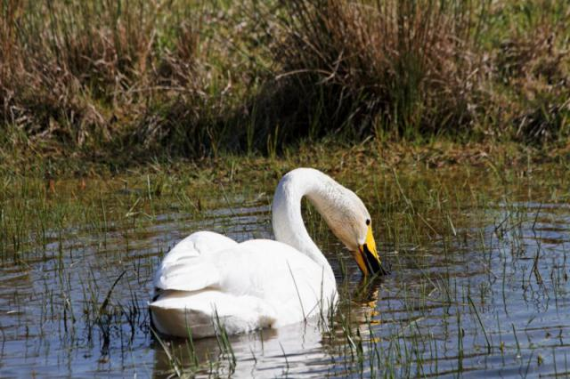Parc ornithologique du Marquenterre 289668Marquenterre_Avril_2010_RAW_273_DxO_raw__800x600_