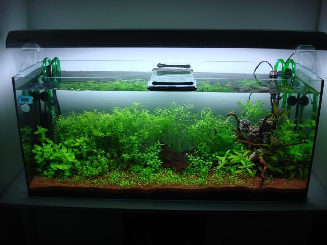 120 litres Planté 297595DSC08313