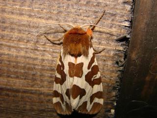le déffilé des chenilles et des papillons 326058photos_003
