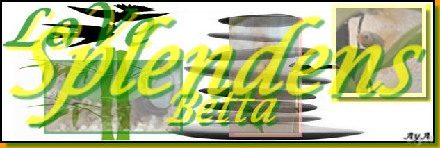 love-betta-splendens