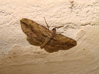 le déffilé des chenilles et des papillons 344915photos_404
