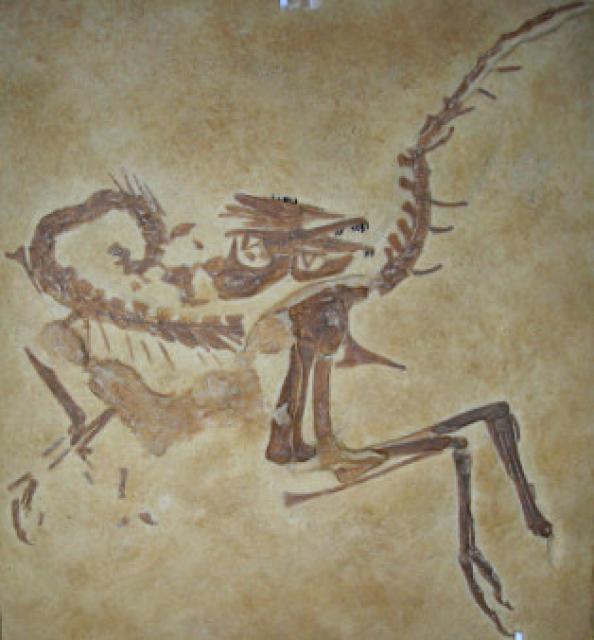 Compsognathus 399381compsognathus4