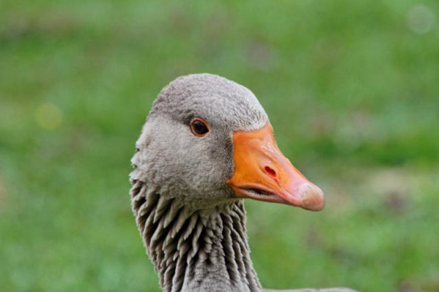 Parc ornithologique du Marquenterre 433025Marquenterre_Avril_2010_RAW_188_DxO_raw__800x600_