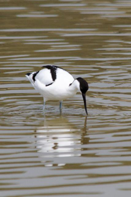Parc ornithologique du Marquenterre 440852Marquenterre_Avril_2010_RAW_107_DxO_raw__800x600_