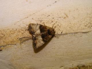 le déffilé des chenilles et des papillons 447926photos_406