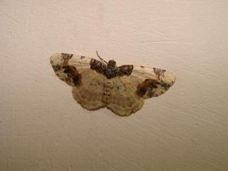 le déffilé des chenilles et des papillons 488728photos_402