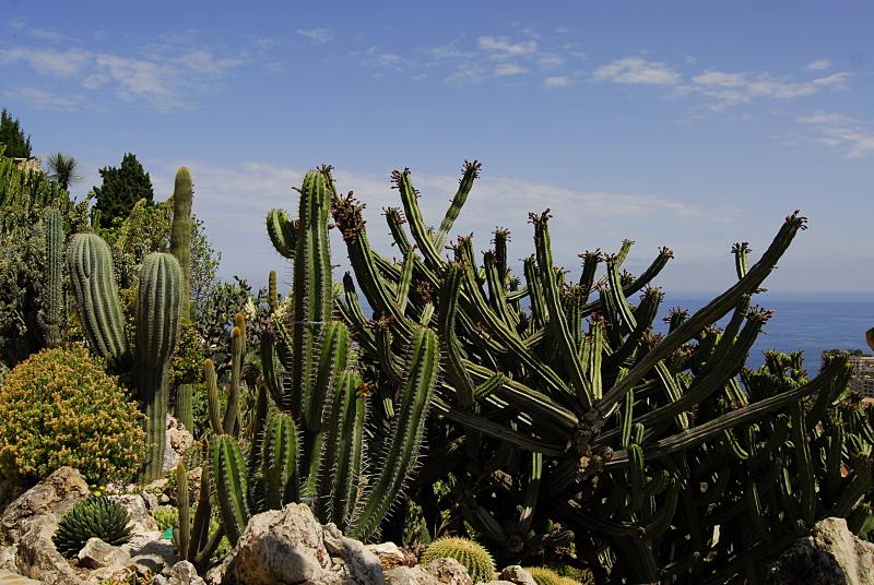 Jardin exotique de Monaco 526300_DSC0196