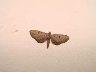 le déffilé des chenilles et des papillons 556287photos_412