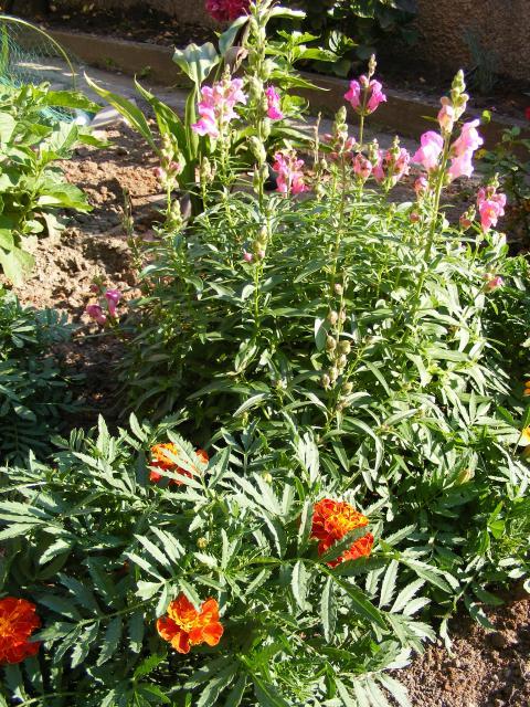 Mon jardin 579846DSCF0160