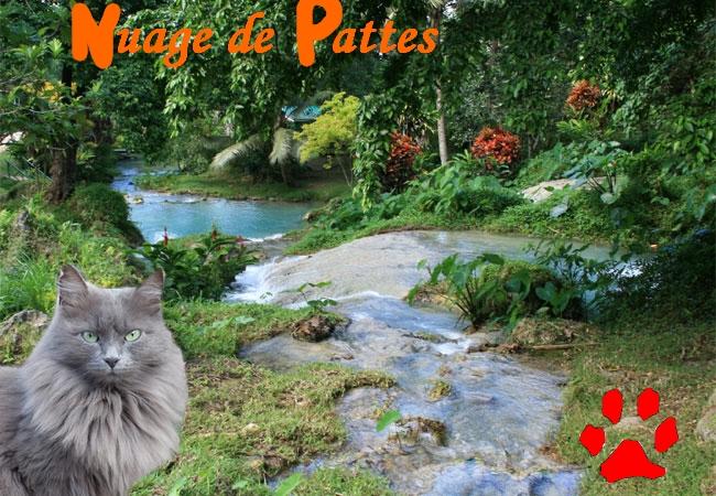 Atelier de Luny 580416Nuage_de_Pattes