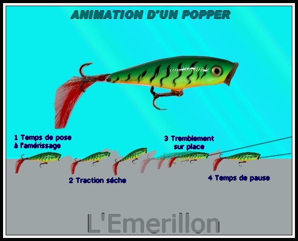 Les poppers 584493animation_popper