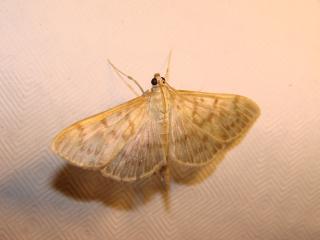 le déffilé des chenilles et des papillons 613450photos_386