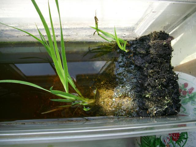 Invasion d'algues vertes... 616161DSCI0824