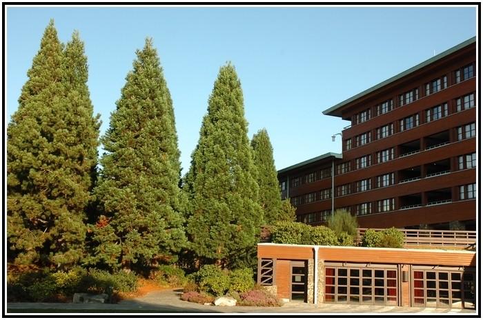 Disney's Sequoia lodges - Page 3 651430EDL0998