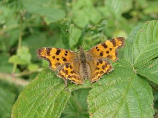le déffilé des chenilles et des papillons 652343photos_129