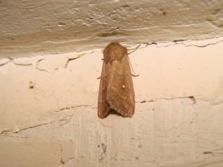 le déffilé des chenilles et des papillons 680413photos_411