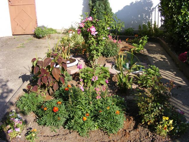 Mon jardin 767448DSCF0157