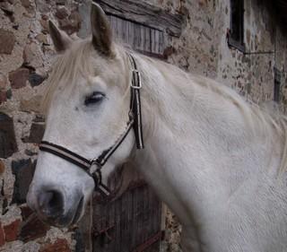 FOREVER (notre mascotte) - Connemara X SF né en 1994 - adopté en novembre 2009 par sophie-france - Page 2 808266photos_novembre_2009_162