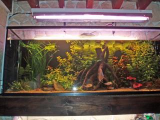 Présention de vos aquariums 827219P9170690_edited