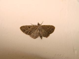 le déffilé des chenilles et des papillons 847630photos_410