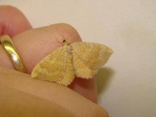 le déffilé des chenilles et des papillons 862460photos_408