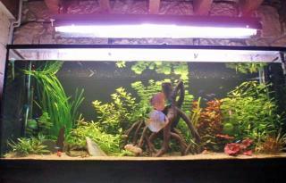 Présention de vos aquariums 872164aqua_haut_edited