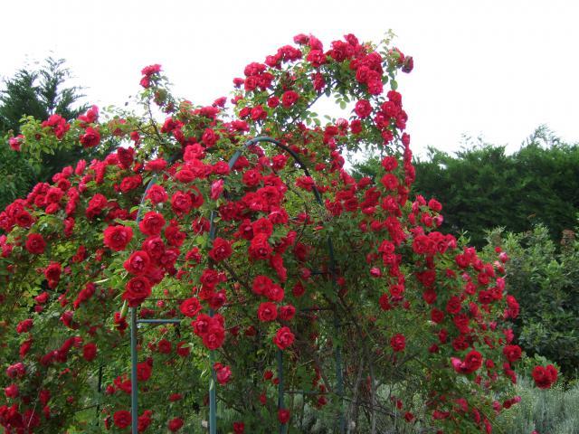 Mon jardin et moi... - Page 2 903489Printemps_2009_077