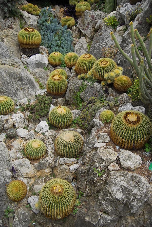 Jardin exotique de Monaco 912368_DSC0138