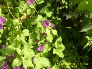 Abeille ou insecte enorme et peut être dangereux Mini_810817DSCI0464