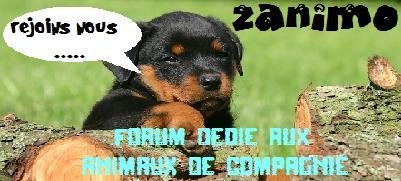 RAT'Z - Portail 474943banniere_zanimo