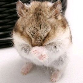 Hamster de Campbell 475211Capture01