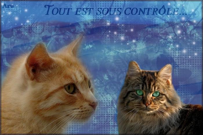 Petit Tonnerre [REUSSI] 778343Apprenti___2_