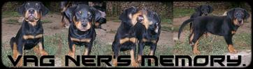 Eure-et-Loir : 224 chiens maltraités confisqués à leur éleveur 976153banniere1