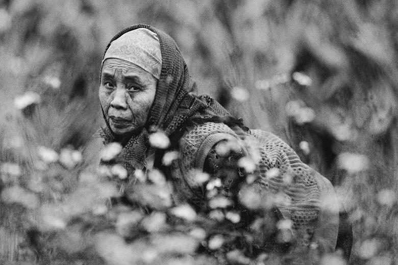 Sắc thái đối nghịch của phụ nữ Việt Pkp8