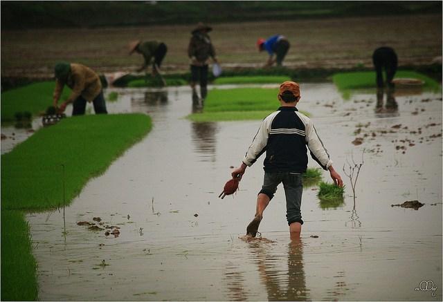Làng quê Việt Nam đẹp giản dị suốt 4 mùa 77933000